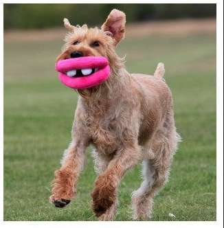 Goofy Grinning Pet Toys - The Ancol Dog Lips Plush Will Induce Some Serious Tail Wagging