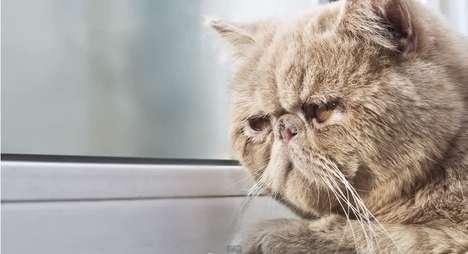 Depressed Animal Diary Videos