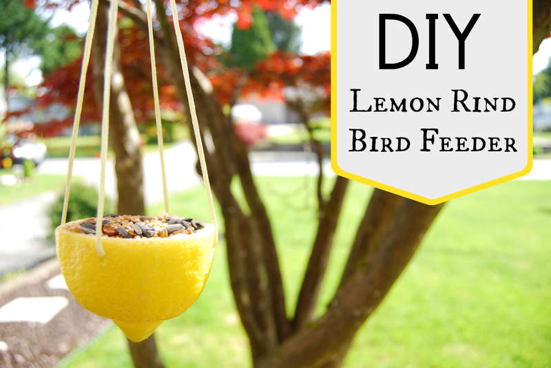 DIY Lemon Bird Feeders