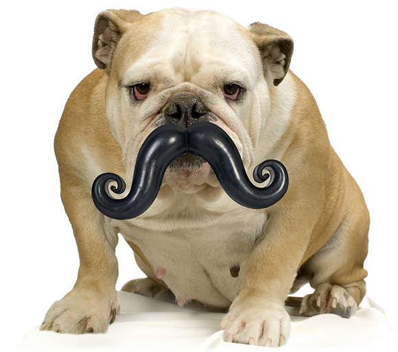 30 Quirky Canine Accessories