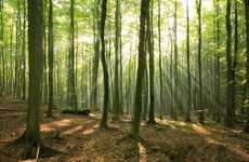 Fuel-Generating Artificial Forests