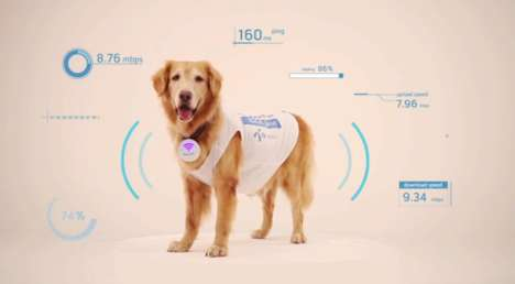 Four-Legged Internet Providers