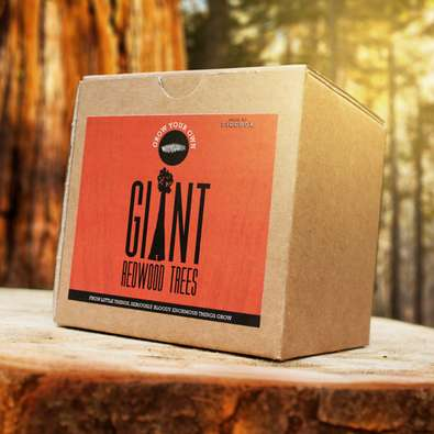 DIY Tree Planting Kits - The 'Grow Your Own Giant Redwood Tree' Box is Ecological and Long-Term