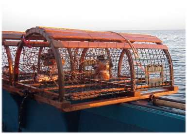 Virtual Ownership of Animal Traps - Adopt a Lobster Trap in Maine