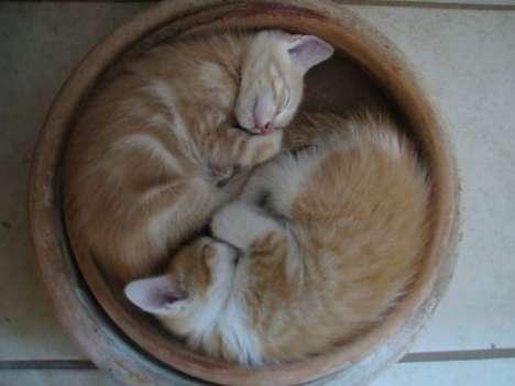 Kitten as Food