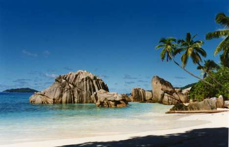 28 Tropical Ideas