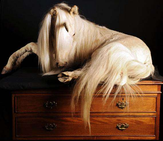 46 Unsettling Taxidermy Creations