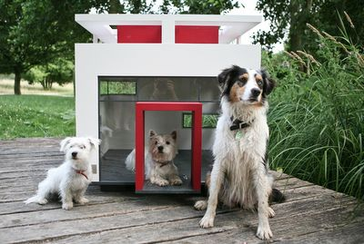 17 Chic Canine Abodes