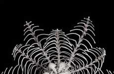 Intricate Bone Artwork