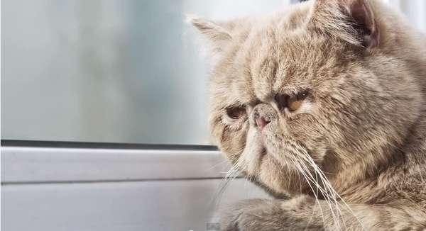 18 Humorous Feline-Centric Videos
