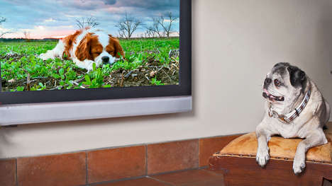 Dog Television Channels