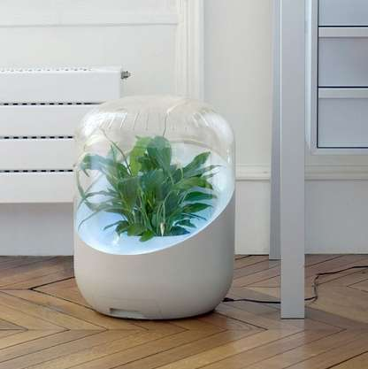 This Plant Air Purifier Will Make Breathing Easier