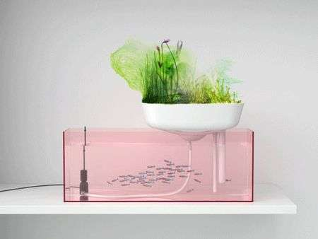 14 Eco-Friendly Aquariums