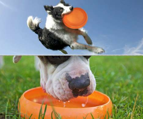 Dual-Purpose Dog Toys - The ThrowBowl Can Be Used for Fun at First Then for a Drink Afterwards