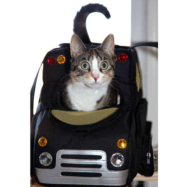 20 Precious Pet Carriers