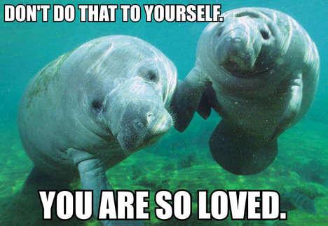 Marine Mammal Mantra Blogs