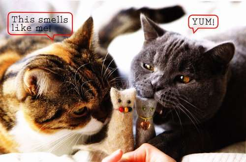 21 Creative Cat Toys