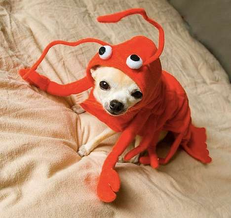 Luxe Delicious Pooch Attire - The 'Lobster Paws' Costume Turns Your Dog into a Mouthwatering Meal