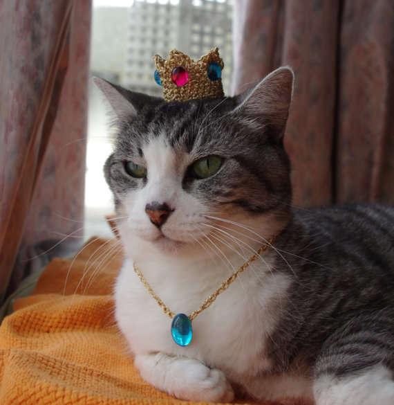 18 Precious Pet Hats