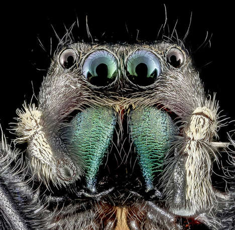 Intimate Insect Photography - These Pictures of Bees Get You Up Close and Personal