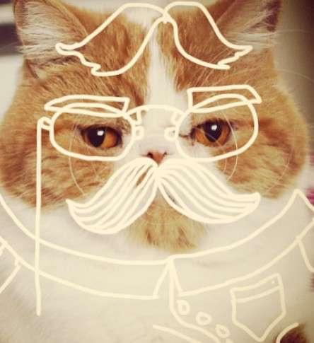 Cat-Doodling Instagram Accounts