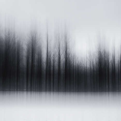Blurry Forest Photography