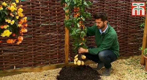 Hybrid Vegetable Vines