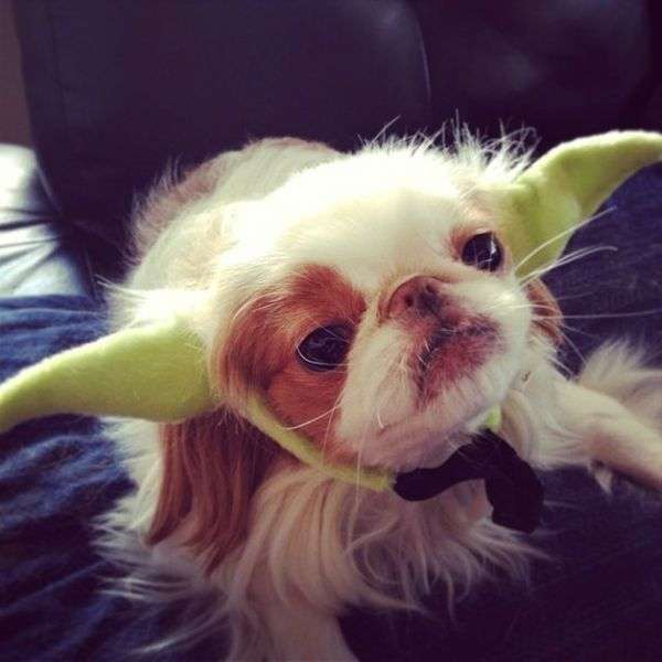 47 Funny Pet Costumes