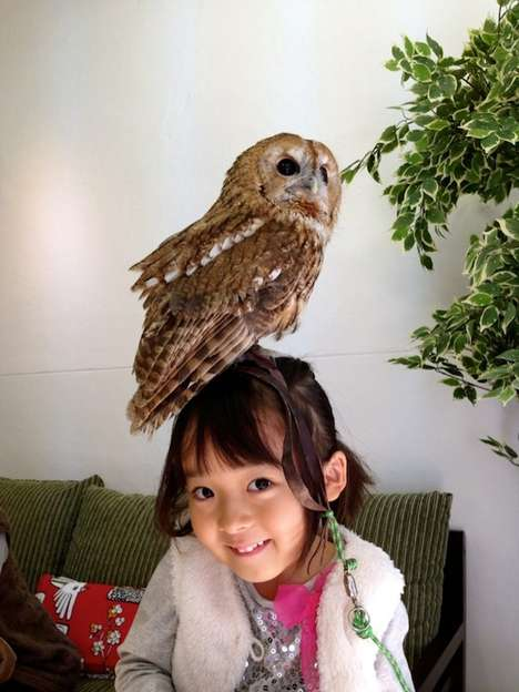 Cozy Owl-Gazing Cafes - These Owl Cafes in Japan Lets You Bird Watch as You Enjoy Your Coffee