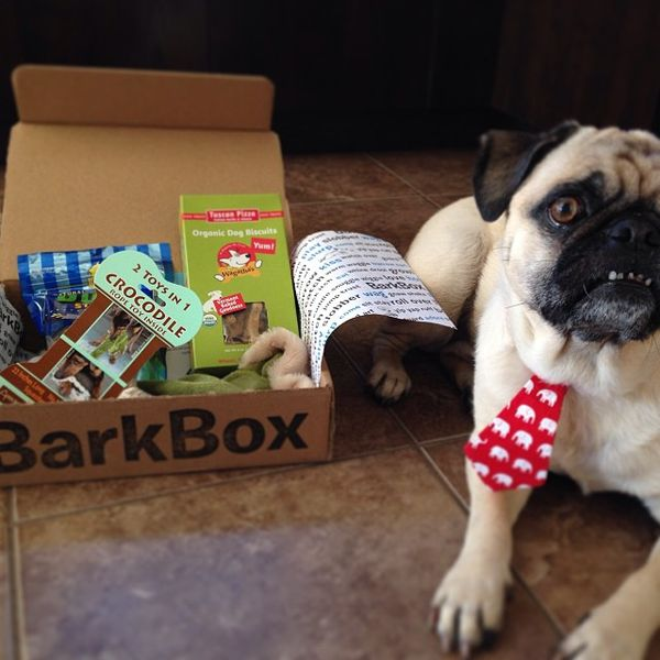 Canine Treat Subscriptions