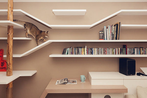 14 Feline-Friendly Shelves