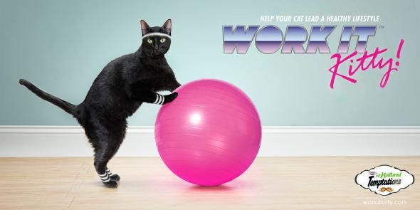 10 Examples of Cat Product Marketing