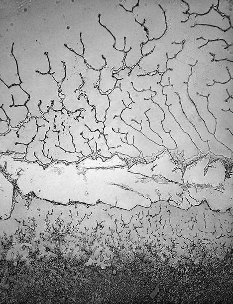 Crystalline Tear Topographies