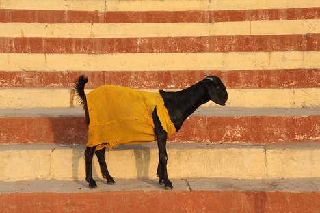 Well-Dressed Animal Art