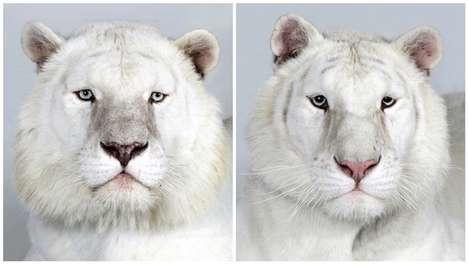 Majestic Jungle Cat Portraits