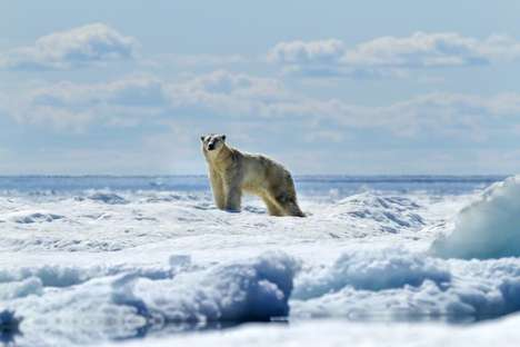 Profound Polar Bear Portraiture - Paul Souders Captures Swimming Polar Bears in His Wildlife Series