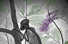X-ray Nature Photographs - These X-ray Photographs Show You Nature Like Never Before