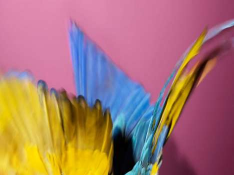 Abstract Parrot Photography
