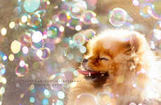 Mini Dog Adventure Photography - Flint by Pomeranian by Robin Yu is Painstakingly Adorable
