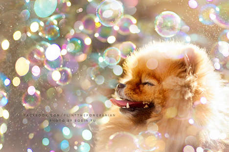 Mini Dog Adventure Photography