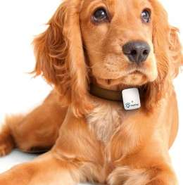 GPS-Enabled Pet Trackers