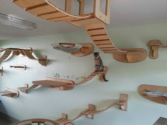 Wall-Mounted Cat Furniture