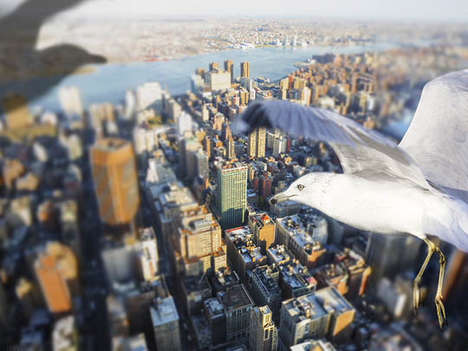 Photographer Howard Takes Amazing Flying Seagull Photography