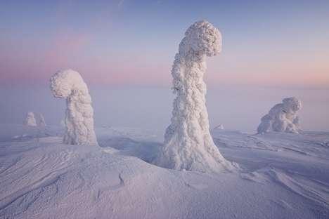 Majectic Iceland Tree Photography
