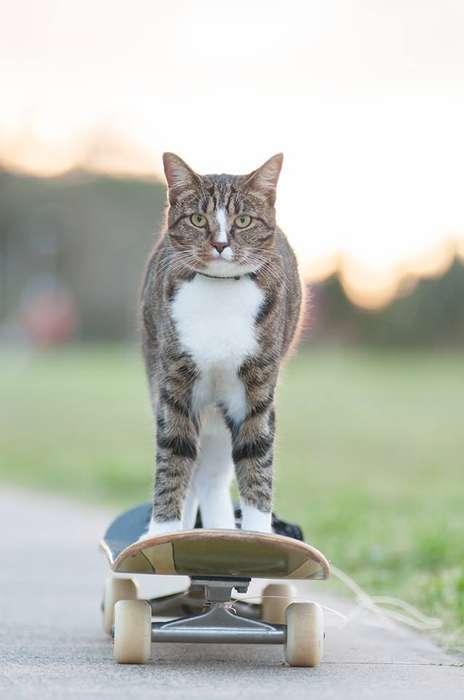 Skateboarding Cat Videos
