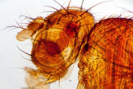 Cancer-Sensing Fruit Flies