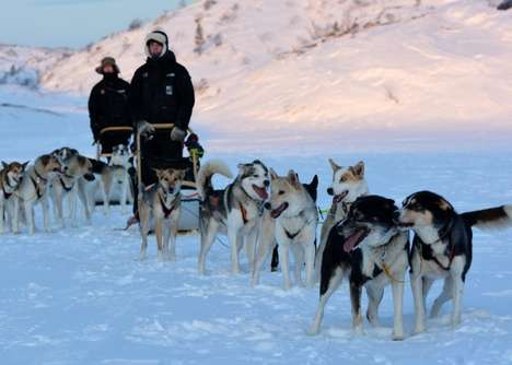 Airport Dog-Sled Taxi Services - This Norwegian Hotel Introduced an Airport Taxi Service with Dogs