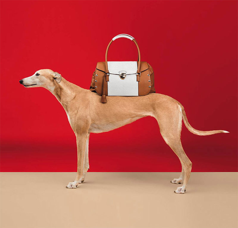 Posing Pooch Fashion Ads