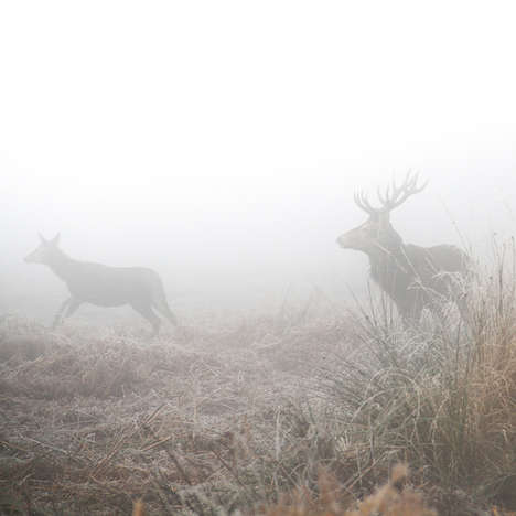 Misty Romantic Deer Photography