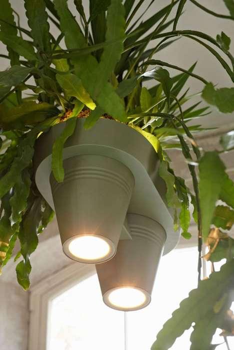 Hanging Light Plant Hybrids